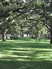 Live Oaks on the Battery