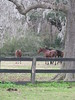 Horses
